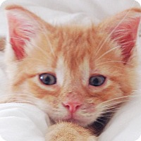 Adopt A Pet :: Ricky - Wharton, TX