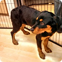 Adopt A Pet :: Minnie - Scottsdale, AZ