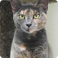 Adopt A Pet :: Harper - Dublin, CA