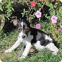 Adopt A Pet :: TINKER - Hartford, CT