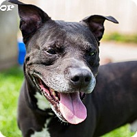Adopt A Pet :: Hector - Ringwood, NJ