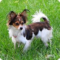 Adopt A Pet :: Tristan - Omaha, NE