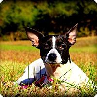 Adopt A Pet :: Madeline - Glastonbury, CT