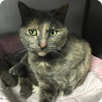 Adopt A Pet :: Peaches - Voorhees, NJ