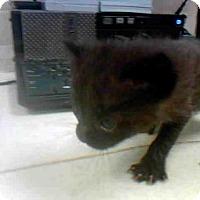 Adopt A Pet :: A277133 - Conroe, TX