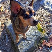 Adopt A Pet :: Frankie - Bridgewater, NJ