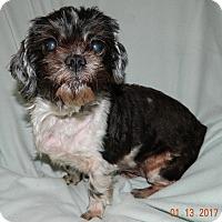 Adopt A Pet :: Izzy - Umatilla, FL