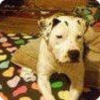 Adopt A Pet :: SNOW WHITE - Hampton, VA