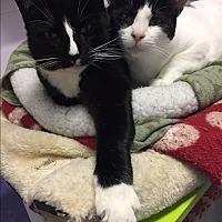 Adopt A Pet :: Myles & Pansy - Harrison, NY