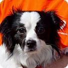 Adopt A Pet :: John Truett