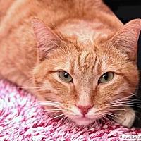 Adopt A Pet :: Jasper - Westchester, CA