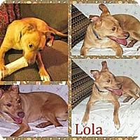 Adopt A Pet :: Lola - Poughkeepsie, NY