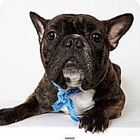 Adopt A Pet :: Marius - New York, NY