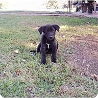Adopt A Pet :: Shadow - Adamsville, TN