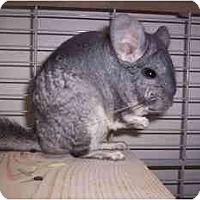 Adopt A Pet :: Palua - Avondale, LA