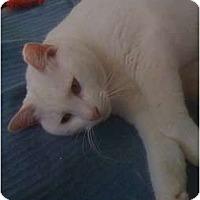 Adopt A Pet :: Frostfur - Monroe, GA