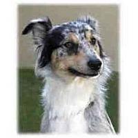 Adopt A Pet :: Dazee - Orlando, FL