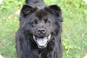 Tyson | Adopted Dog | Tucker, GA | Chow Chow/Border Collie Mix