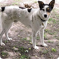 Adopt A Pet :: Stich-pending adoption - Manchester, CT