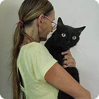 Adopt A Pet :: BIGGERS - Makawao, HI