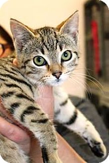 cute cat breeds with pictures
