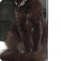 Adopt A Pet :: Llorona - Burlington, WA