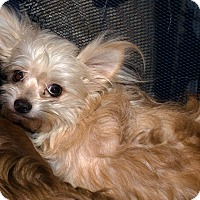 Adopt A Pet :: Trixie - Westfield, IN