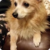 Adopt A Pet :: Penny - Alden, NY