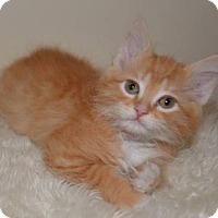 Adopt A Pet :: Clancy - Davis, CA