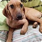 Adopt A Pet :: Carmen--URGENT