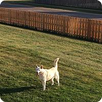 Adopt A Pet :: Aspen - Crystal Lake, IL
