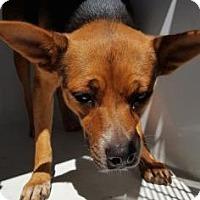 Adopt A Pet :: Nyla - Fresno, CA