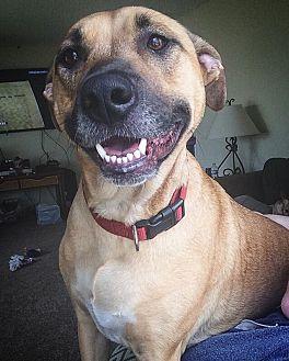 German Shepherd Dog Mix Dog for adoption in Lakeville, Minnesota - Susie