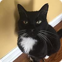 Adopt A Pet :: Eli - Rochester Hills, MI