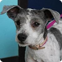 Adopt A Pet :: CINDY - Red Bluff, CA