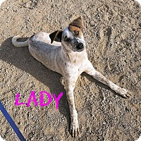 Adopt A Pet :: Lady - California City, CA