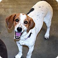 Adopt A Pet :: Fiona - San Jacinto, CA