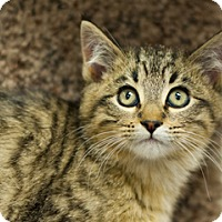 Adopt A Pet :: Manuel - Great Falls, MT