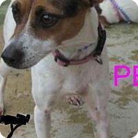 Adopt A Pet :: Peggy - Wytheville, VA