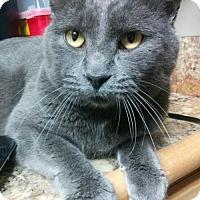 Adopt A Pet :: Logan - South Saint Paul, MN