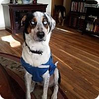Adopt A Pet :: Rodney - Burlington, NJ