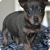 Adopt A Pet :: Wren - Southington, CT