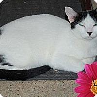Adopt A Pet :: Louise - River Edge, NJ