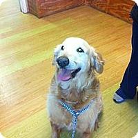 Adopt A Pet :: Jasper - Cheshire, CT