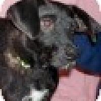 Adopt A Pet :: Bella - East Sparta, OH