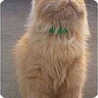 Adopt A Pet :: patty - Davis, CA