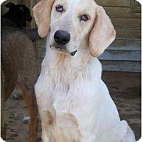 Adopt A Pet :: Claude - Albany, NY