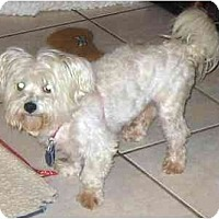 Adopt A Pet :: Harley - Conroe, TX