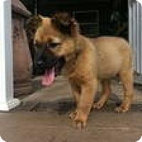 Adopt A Pet :: Baby Zac - Marlton, NJ