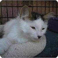 Adopt A Pet :: Frizzle - Brea, CA